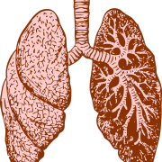 lungs-37824_1280